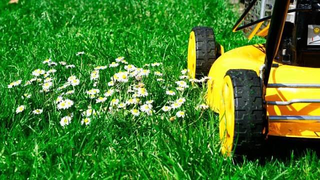 pravidelné sekání zlepší kvalitu trávy