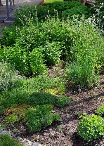 <p>Z kuchyně stačí udělat pár kroků a čerstvé bylinky jsou hned po ruce – pažitka, tymián, máta, meduňka, koriandr.</p>
