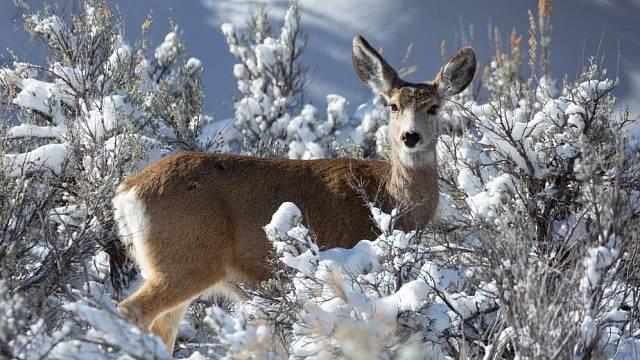 Zvěř v zimě