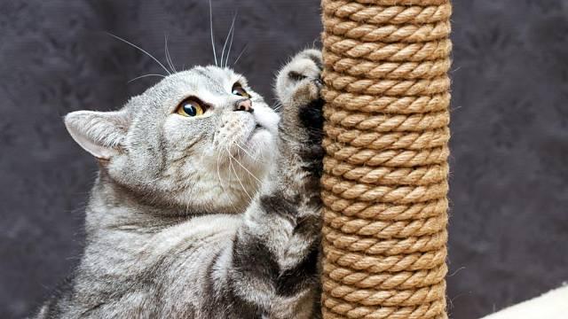 Kočka a škrabadlo