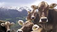 Foto: Südtirol Marketing