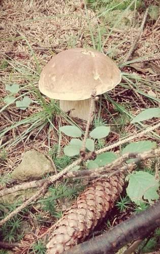 Nej houbař Pardubický