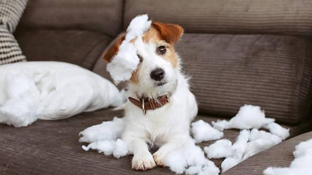 Pes, hravý ničitel