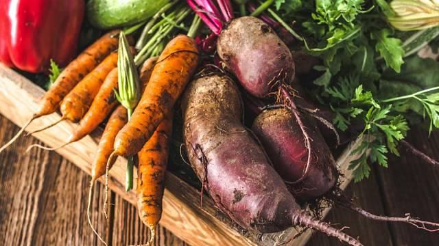 skladovani zeleniny a ovoce