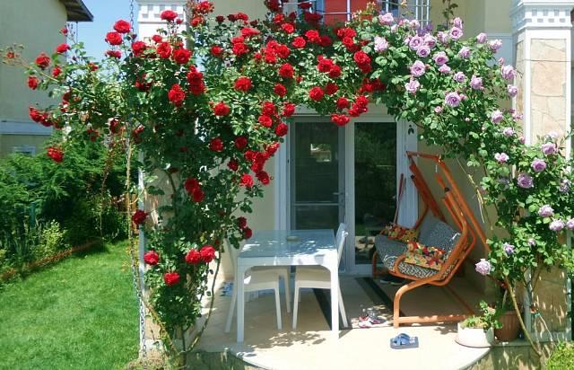 Růžové zákoutí