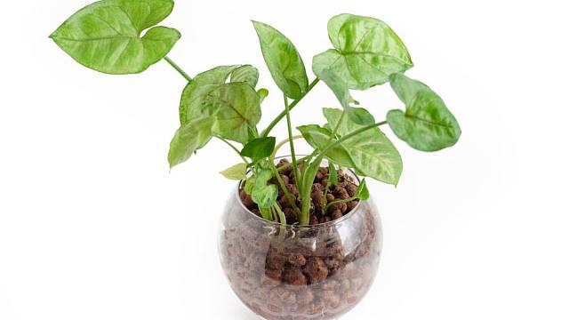 Pro hydroponické pěstování rostlin se hodí jako podklad například keramzit.