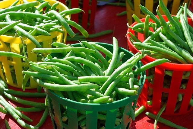 Zelené lusky fazolu zahradního jsou chuťově jemné a křehké