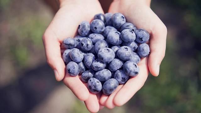 Lahodné plody v sobě ukrývají mnoho zdraví prospěšných látek.