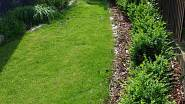Úzký průchod vyžaduje snadno tvarovatelné keře, jako jsou zimostrázy (Buxus). Pevná linie u plotu je zjemněna travinami u fasády domu, jejich jemná textura a květenství vyniknou na pozadí tmavé fasády.
