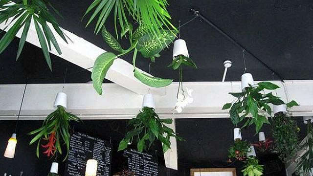 S velmi netradičním nápadem, jak zapojit rostliny do moderního interiéru, přišel kreativní tým společnosti Boskke. Ten navrhl květináče, které se nikam nepokládají, ale rovnou se věší ke stropu. Díky integrovanému závlahovému systému v nich mohou rostl...