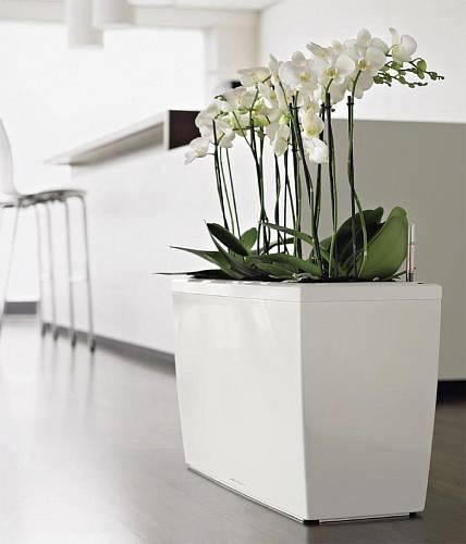 Obří květináče do bytu i zahrady