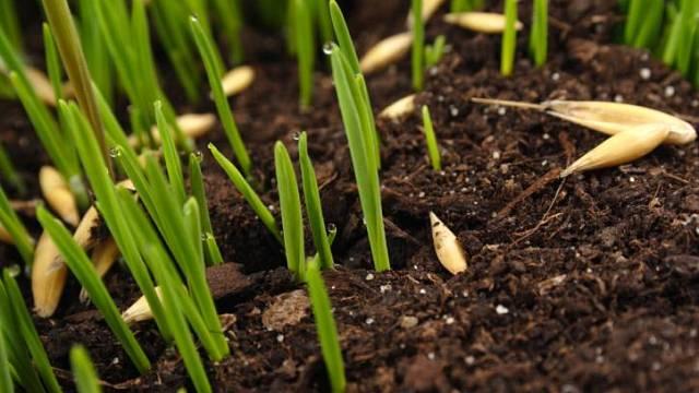 na založení nového trávníku je duben nejlepší