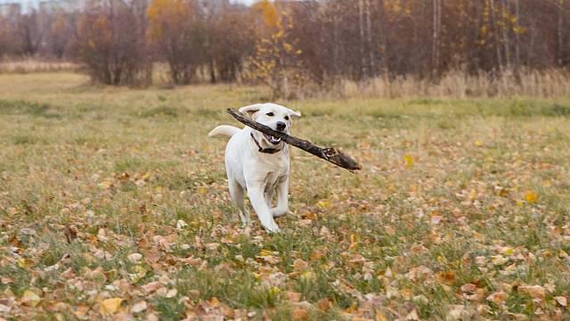 Dostatek pravidelného pohybu je pro zvířata a zejména pro psy nezbytný.