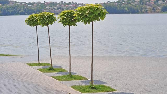 Oblíbená je i v městských a parkových aplikacích