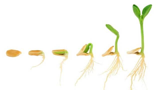 Semena rostlin