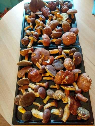 Nej houbař Moravskoslezský