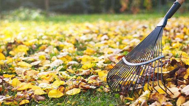 travnik na podzim