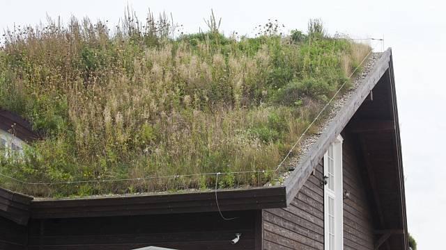 Střešní louka může vyrůst i na stavbě ze dřeva