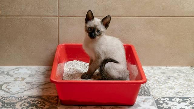 Kočku je třeba učit na záchod již odmalička, abychom předešli tomu, že bude znečisťovat podlahy nebo nábytek.