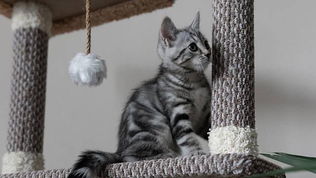 Není nad pořádná škrabadla nebo kočičí domky!