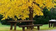 Dokud je hezky, poseďte chvíli na lavičce pod lípou i na podzim.