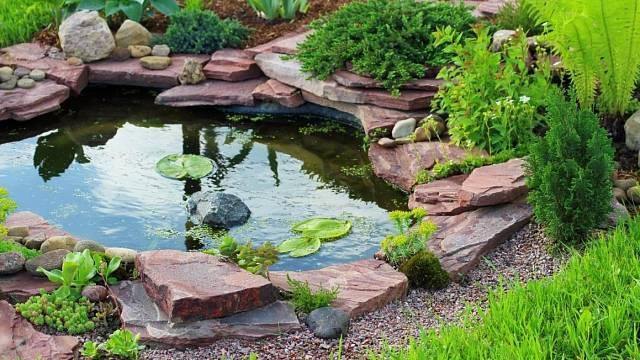 Jak připravit zahradní jezírko na jaro?