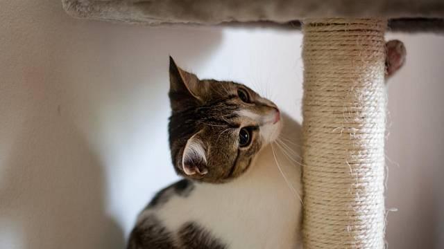 Kočičí nábytek