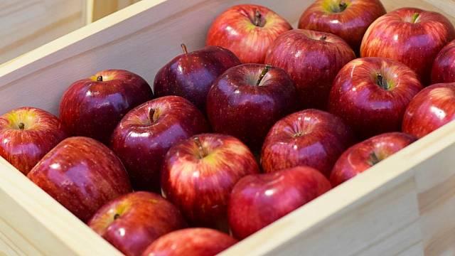 skladovani ovoce a zeleniny