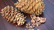 Piniové oříšky - Pinus cembra.