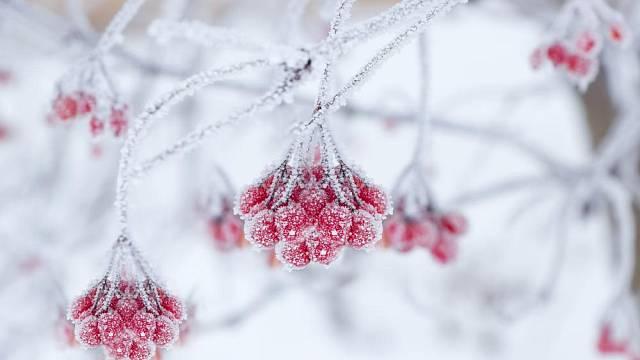 rostliny kvetouci v zime