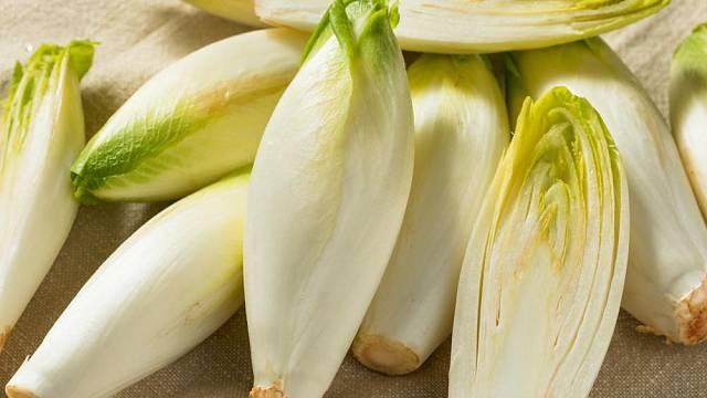 Puky čekanky salátové