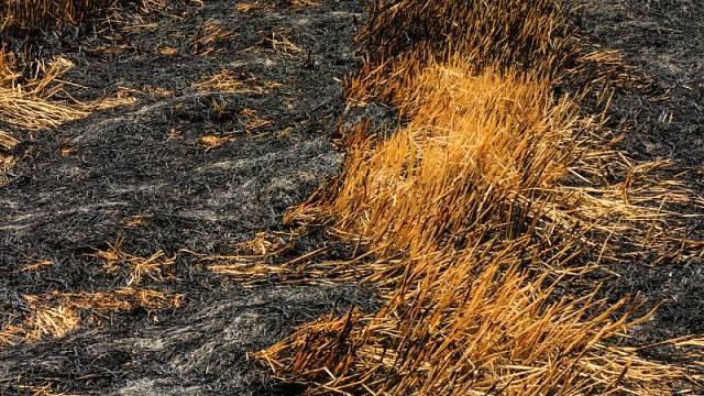 Vypalování mezí a strnišť mělo své důvody