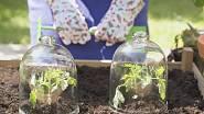 S vysazováním teplomilných druhů zeleniny (rajčata, papriky, cukrové melouny, lilky a okurky) na otevřený záhon musíme počkat do odeznění mrazíků, což bude okolo 20. května.