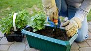 V květnu nastává hlavní sezona pro výsadbu balkónových letniček do truhlíků, korýtek a květináčů.