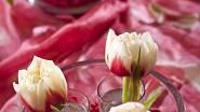 Tulipánové oživení