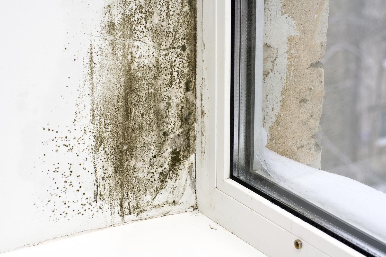 Как избавиться от плесени на стенах в квартире навсегда.