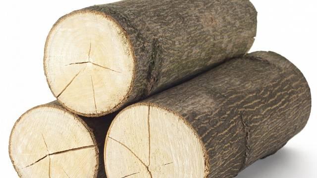 Dubové či bukové dřevo musí schnou déle než třeba smrk
