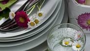 Květy sedmikrásek můžeme použít pro ozdobu jídla, jsou jedlé.