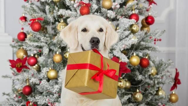Pes o Vánocích