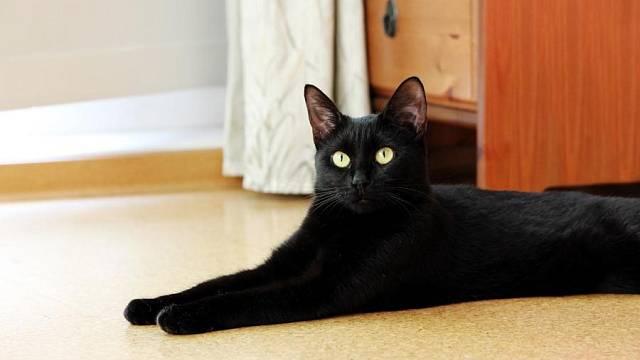 Kočka na korkové podlaze
