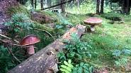 Nej houbař Karlovarský