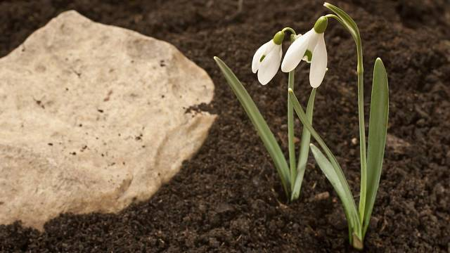 To, že vylezou ven sneženky neznamená, že půda už není zmrzlá. Na osev trávníku raději ještě počkejte.