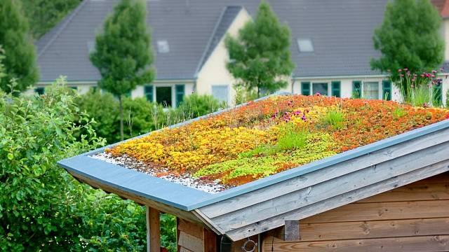 Výběr rostlin a skladba střechy závisí na jejím sklonu.