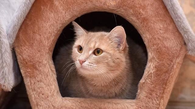 Kočky milují různé úkryty a skrýše, ať už zakoupené, nebo vytvořené z krabic a starých tašek.