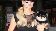 Paris Hilton na nákupech se svým psíkem