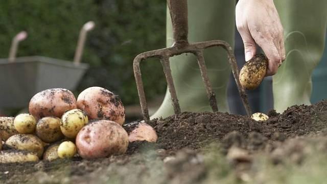 V dubnu je ideální čas na výsadbu brambor