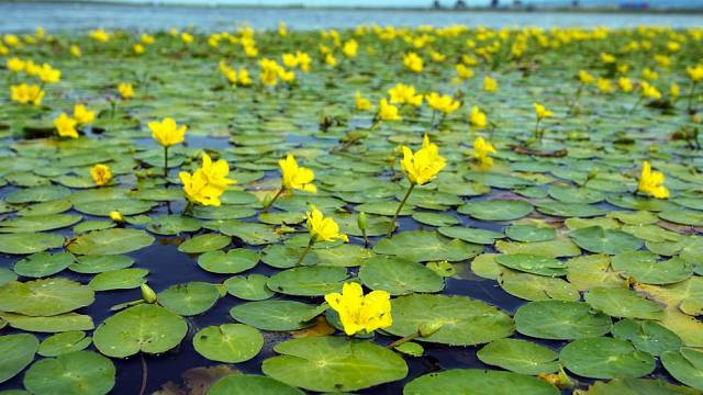 vodni rostliny