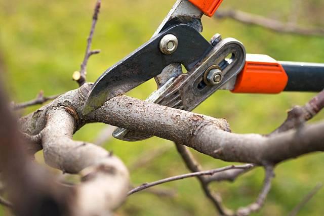Drtič větví udělá drť z větví až 7 cm silných.