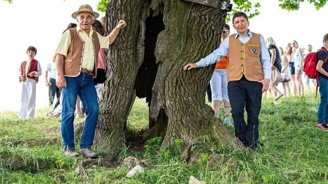 Dubisko valašisko tvrdé, jak se stromu říká, je staré zhruba 500 let.