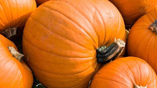 Velkoplodé dýně mohou dosahovat hmotnosti až 30 kg na jeden kus!